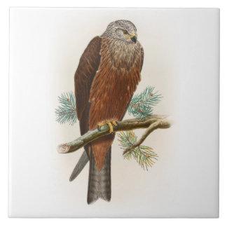 Black Kite Hawk John Gould Birds of Great Britain Ceramic Tile