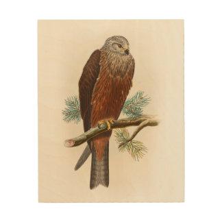 Black Kite Hawk John Gould Birds of Great Britain Wood Wall Decor