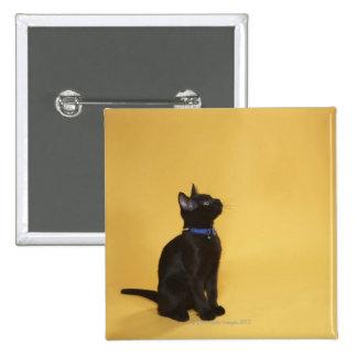 Black kitten in collar 15 cm square badge