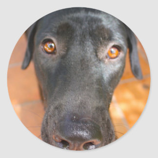 black Lab Classic Round Sticker