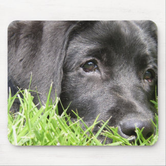 Black Lab Daydreamer Mouse Pad