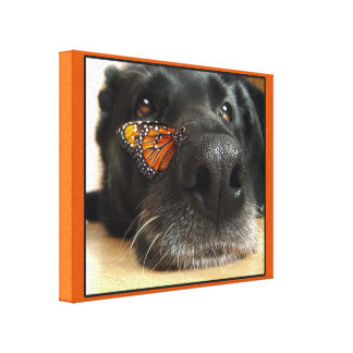 BLack Lab Dog With Butterfly Stretched Canvas Prints
