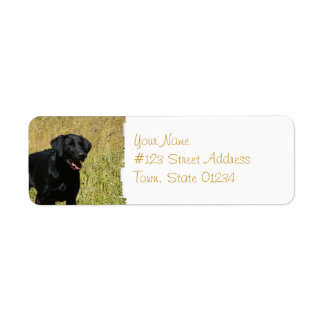 Black Lab in Field Mailing Labels