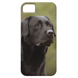 Black lab iPhone 5 case