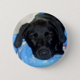 Black Lab Puppy 6 Cm Round Badge