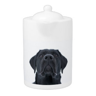 Black lab teapot, cuddly gorgeous dog
