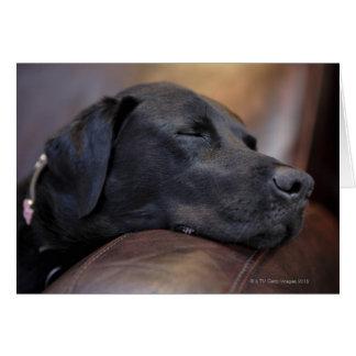 Black labrador asleep on sofa, close-up greeting card