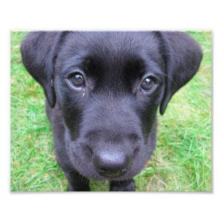 Black Labrador Dog on Grass Photo Art