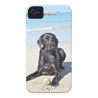 Black Labrador Dog sitting on the Beach iPhone 4 Case