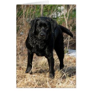 Black Labrador - Early Spring Hunt Card