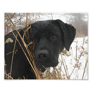 Black Labrador - Late Season Hunt Photo Print