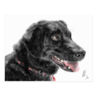Black Labrador Postcard