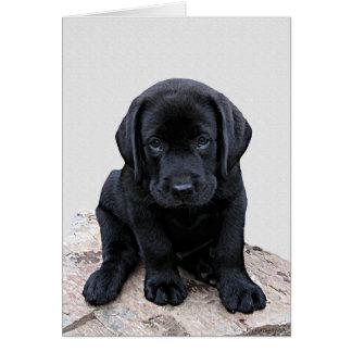 Black Labrador Pup Card