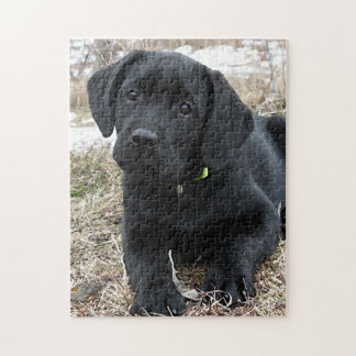 Black Labrador Puppy - Awaiting Spring Jigsaw Puzzle