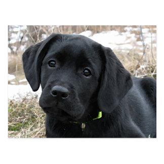 Black Labrador Puppy - Awaiting Spring Postcard