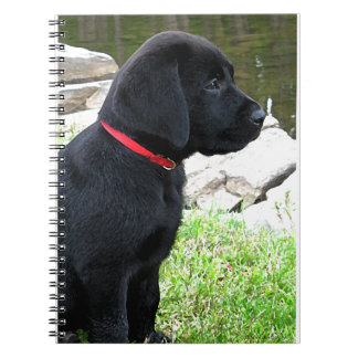 Black Labrador Puppy  - Day at the Water Spiral Notebooks