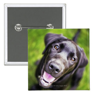 Black labrador puppy looking upwards, close-up 15 cm square badge