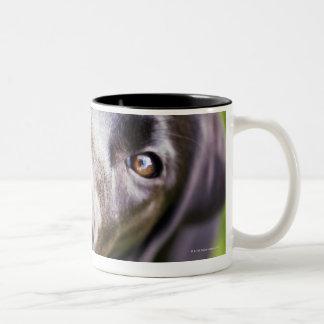 Black labrador puppy looking upwards, close-up coffee mug