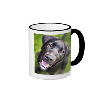 Black labrador puppy looking upwards, close-up mug