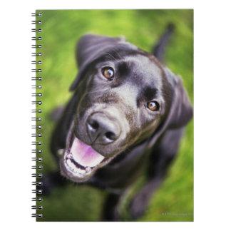 Black labrador puppy looking upwards, close-up spiral note book
