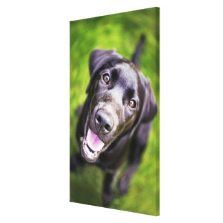 Black labrador puppy looking upwards, close-up stretched canvas prints