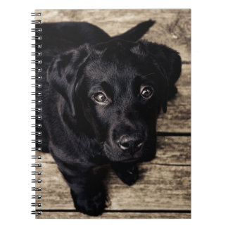 Black Labrador Puppy Notebooks