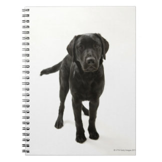 Black labrador retriever note books