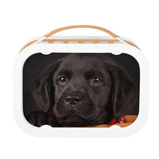 Black labrador retriever puppy in a basket lunch box