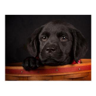 Black labrador retriever puppy in a basket postcard
