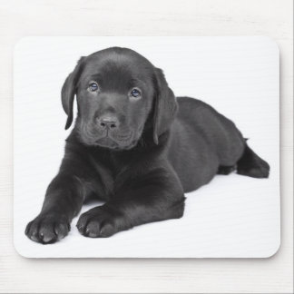 Black Labrador Retriever Puppy Mousepad