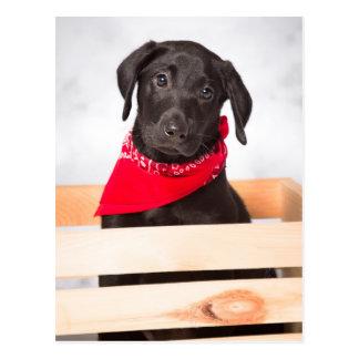 Black Labrador Retriever Puppy Postcard