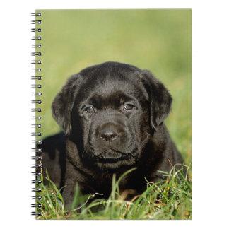 Black labrador retriever puppy spiral notebooks
