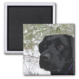 Black Labrador - Sparkling Pines Magnet