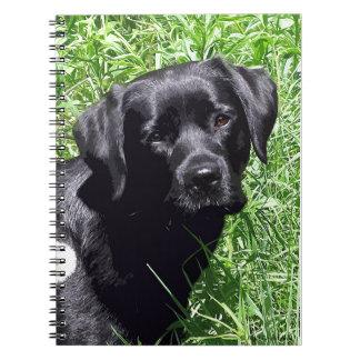 Black Labrador - Spring Day Note Book