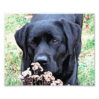 Black Labrador - Take Time Photo Print