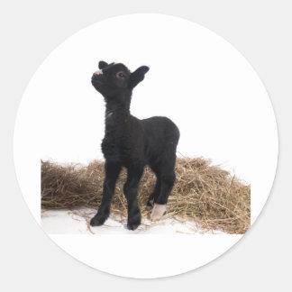 black lamb round sticker