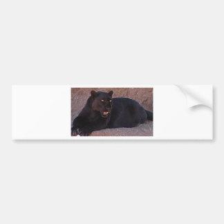 Black Leopard Bumper Sticker