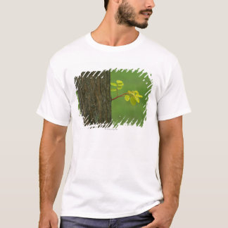 Black locust tree growing a new branch T-Shirt