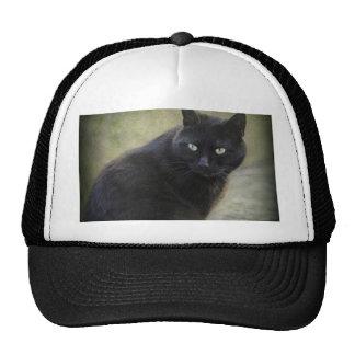 Black male cat with green eyes trucker hat