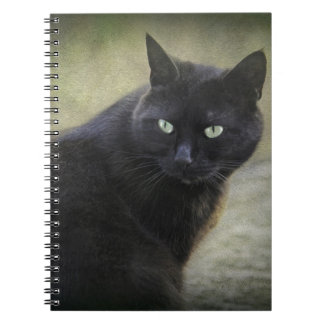 Black male cat with green eyes spiral note books