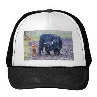 Black mother scottish highlander cow cap