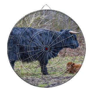 Black mother scottish highlander cow with calf dart boards