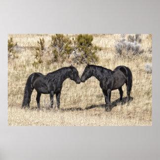 Black Mustang Stallions Poster