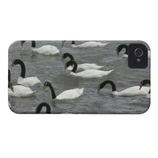 Black-necked swans (Cygnus melancoryphus) on iPhone 4 Cases