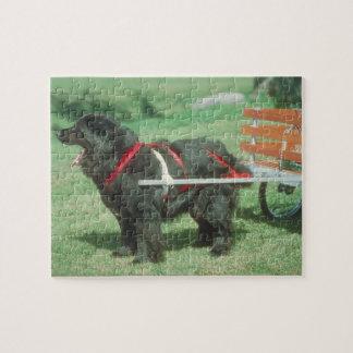 Black Newfoundland Cart Dog Puzzle