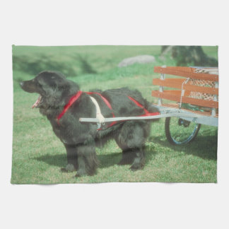 Black Newfoundland Dog Kitchen Towel