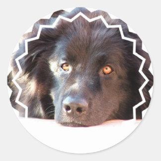 Black Newfoundland Dog Stickers