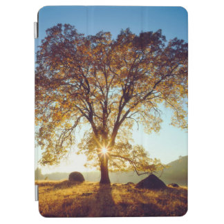 Black Oak Trees | Cleveland National Forest, CA iPad Air Cover