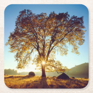 Black Oak Trees | Cleveland National Forest, CA Square Paper Coaster