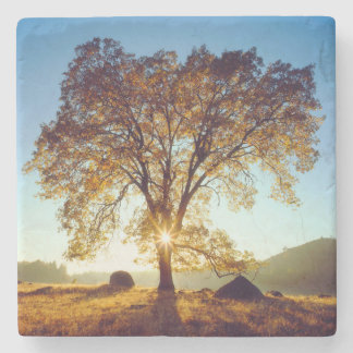 Black Oak Trees | Cleveland National Forest, CA Stone Coaster